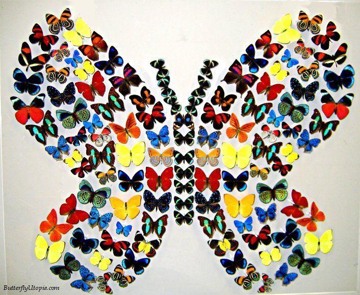 Rainbow Flight ButterfliesDiy Butterflies, Butterflies Collage, Beautiful Butterflies, Butterflies Murals, Heart Butterflies, Things Butterflies, Butterflies Flow, Butterflies Utopia, Butterflies Art