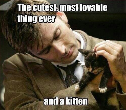 And a kitten Doctor Who