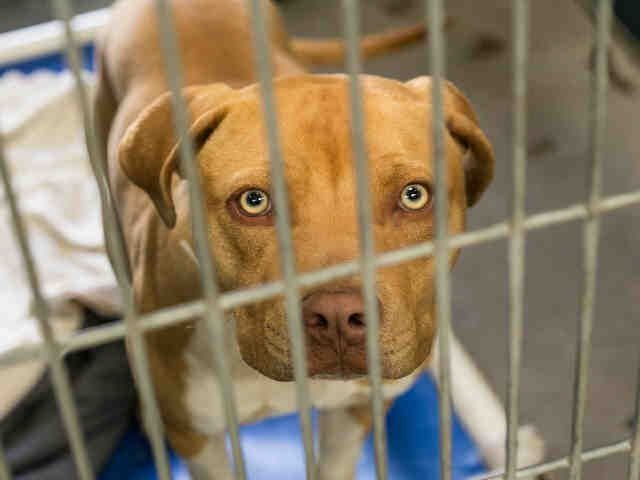 Petharbor Com Animal Shelter Adopt A Pet Dogs Cats Puppies Kittens Humane Society Spca Lost Found Animal Shelter Humane Society Dogs