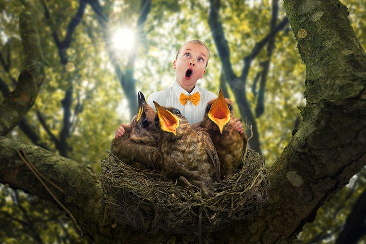 Креатив Птицы Девочки Ствол дерева Гнездо Ребёнок, Смешные, оригинальные Дети Юмор