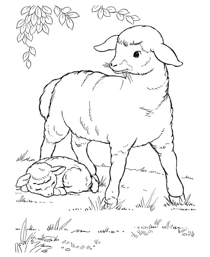 21 best farm animals Coloring Pages images on Pinterest Farm - best of coloring pages for year of the sheep