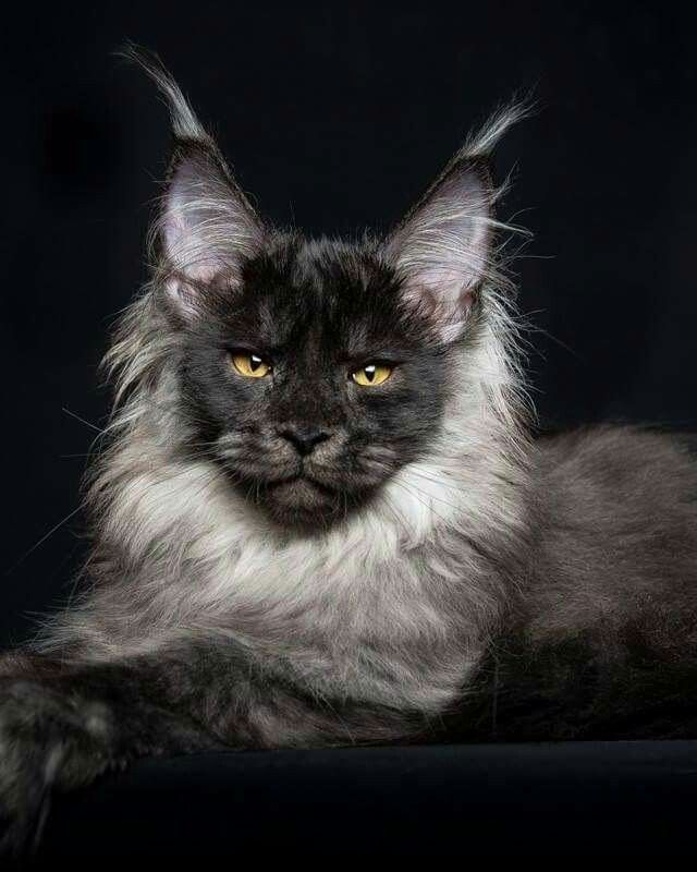 Awesome looking cat!!