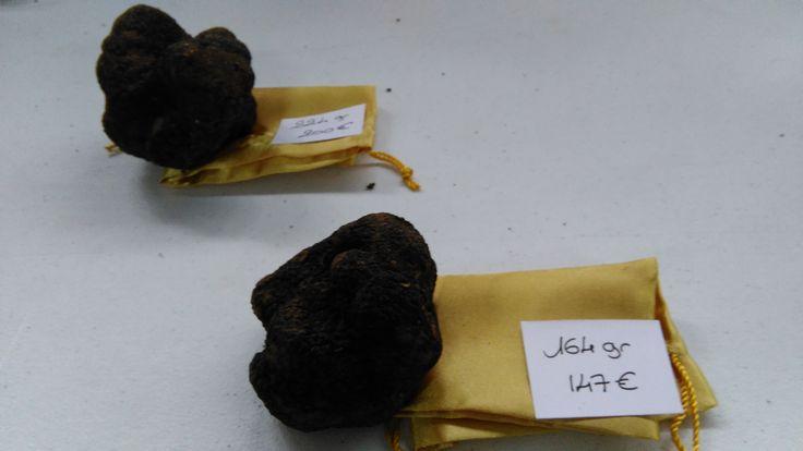Truffes_Fête de la truffe à Villeneuve sur Vère - près de Brin de Cocagne - chambre d'hôtes écologique de charme dans le Tarn près d'Albi - Brin de Cocagne