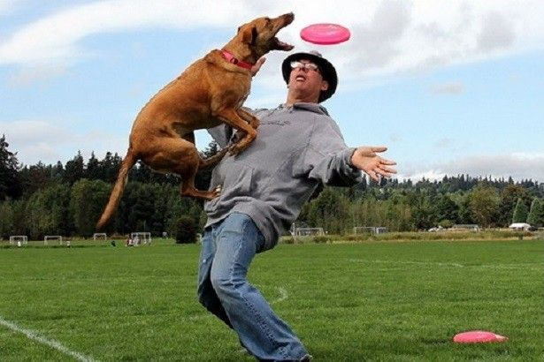 Creating the pet to complete that which you want are not able to be created inside the short-term. Prior to coaching the pet, you must realize all of these. The Koehler Dog Training has become called a single from the powerful pet education strategies. It's got verified by several canine homeowners also.