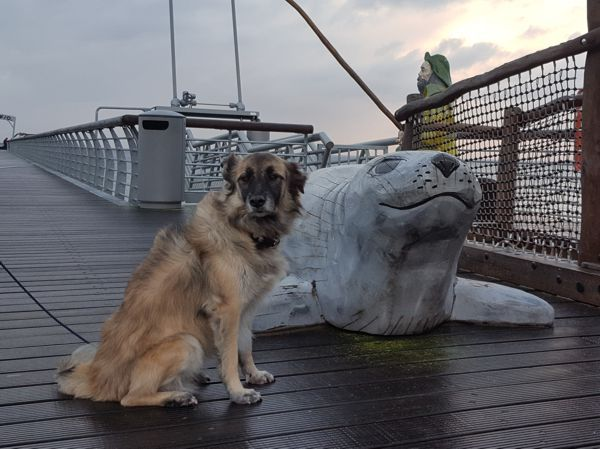 Seehund neben Seehund auf der Niendorfer Seebrücke