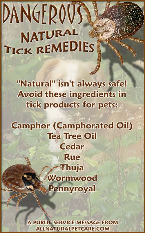Dangerous Natural Tick Remedies (Infographic) | Pet TIPS ...