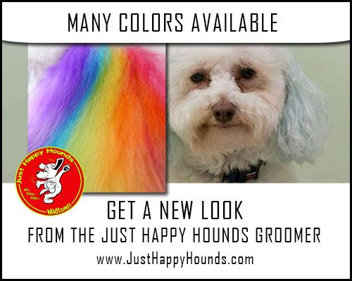 7 best dog grooming images on pinterest dog grooming dog get your dog a new look in our dog grooming department at just happy hounds with many dog hair colors to choose from our dog groomers would solutioingenieria