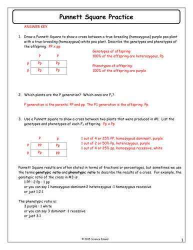 7-Punnett-Square-Practice-Answer-Key.docx | Genetics ...