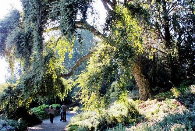 UC Davis Arboretum - Davis, California | AFAR.com