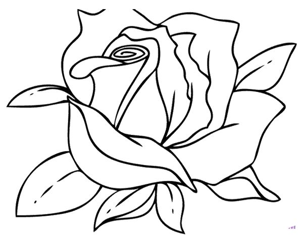Beautiful Flower Line Drawing : Best art skilder inkleursketse images on pinterest