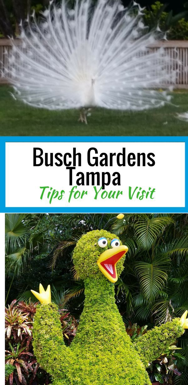 Busch Gardens Tampa tips for your visit.