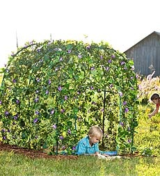 Grow a lush, leafy fairytale dwelling right in your own backyard. Set up the framework, plant seeds around the base and watch as nature grows a living roof and walls up, over and around it.