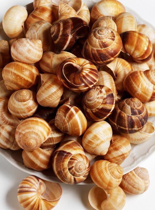 Recette d'escargots assaisonnés au pastis. Avec du bouillon de poulet, de la fécule de maïs, de l'oignon, de l'ail, des graines de fenouil, de la courgette. Une recette d'entrée parfaite pour les grandes occasions.