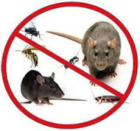 We understand that pests can be a real problem. It doesn't matter whether you've got rats, mice, cockroaches, ants or anything else of the sort, we can handle it in no time at all.