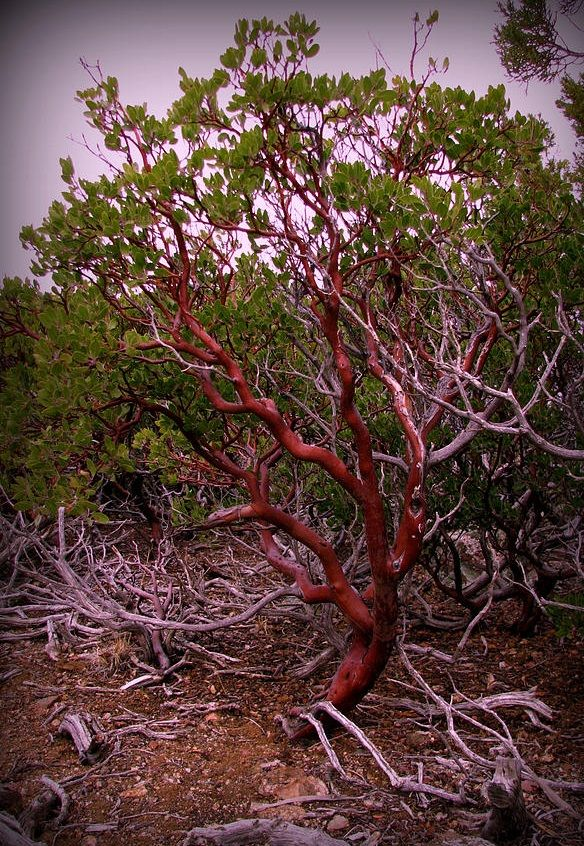 29 Best Arizona Trees Images On Pinterest Arizona
