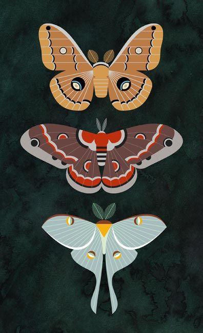Scott Partridge: Saturniidae – Jessica Cabral