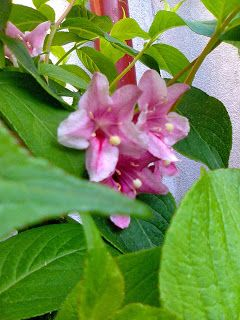 Adriana  Hobby: Grădina în luna mai - luna florilor