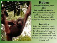 Sepilok Rehabilitation Center-Sabah-Borneo-Orangutan appeal UK - Orangutan Appeal UK