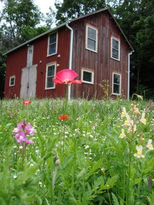 """How to grow a meadow in your yard--referred to as a """"no-mow lawn."""" I hope to have the option some day!"""