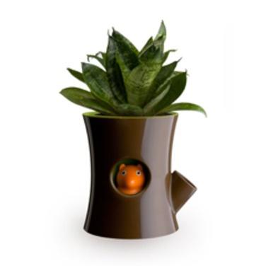 Macetero autorregante con indicador de ardilla. Esta mágicamente va desapareciendo cuando la planta tiene sed.