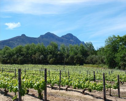 A Beautiful Tour of South African Wine Country