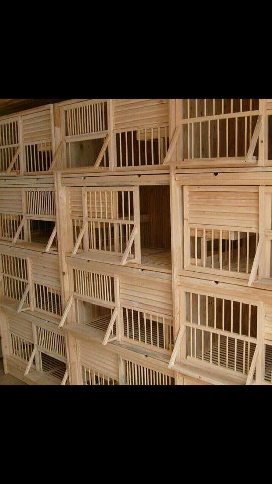25 best ideas about pigeon loft design on pinterest for Pigeon coop ideas