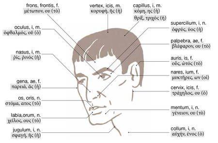 corpus humanum - Buscar con Google