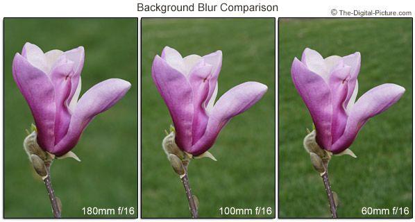 Canon EF 100mm f/2.8 USM Macro Lens Review