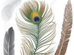 Usos medicinales y aplicaciones curativas de la ruda. Para qué sirve la ruda. La planta de ruda, cuyo nombre científico es Ruta graveolens, posee varios usos medicinales y aplicaciones curativas, las cuales están dadas por sus propiedades...