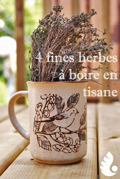 4 fines herbes à essayer en #tisane | #QuintusMkg