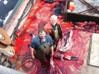 CANADA: 50,000 + seals MURDERED by the hobos of NEWFOUNDLAND this year. @seashepherd