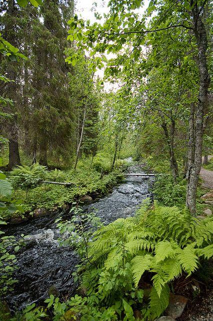 Pyhäjoki trail at the Pallas-Yllästunturi National Park, Finland.