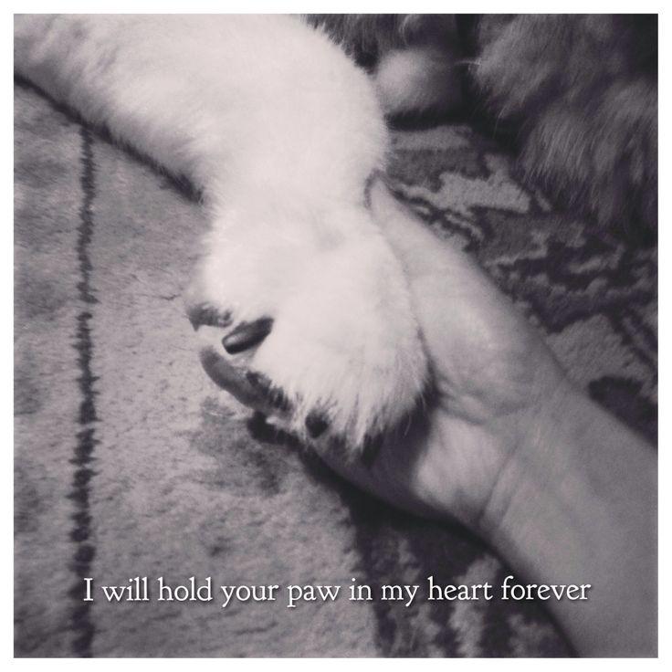#forever #boomer #husky #pets #memories #siberian #dog #holdmyhand #petmemorials #pet #petlover #ilovemydog #puppy #bestfriendforever