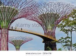 Imagini pentru tree like structure