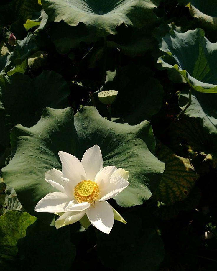 "Lotus ~"" _ auto. i clicked ..@fakeiam_1 ~ Lotus ~"" _ auto. i clicked .. i said : fakeiam, i should be Humble .."