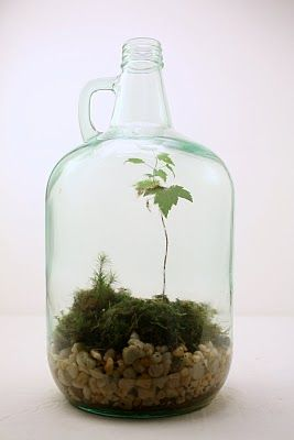 wilderness .... I want to pick up one of these from a beer supply store, glass growler terrarium