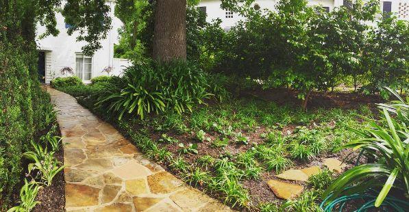 Shady front garden makeover done in time for the weekend 🌿 #liquidambar #liriope #ajuga #clivea #garden #melbourne #shadegarden