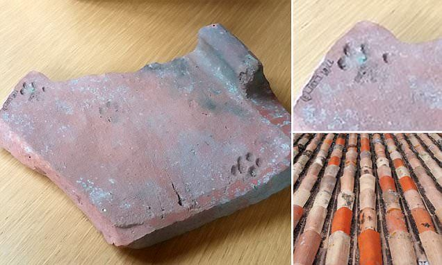 I came, I PAWED, I conquered! Roman 'army cat' left its paw prints in a 2,000-year-old clay tile discovered in Gloucester | Daily Mail Online