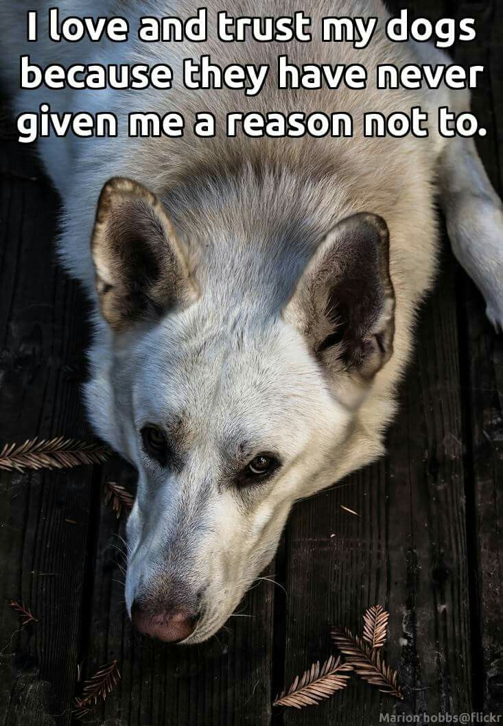 17 Best images about Dog/wolf quotes/funny on Pinterest ...