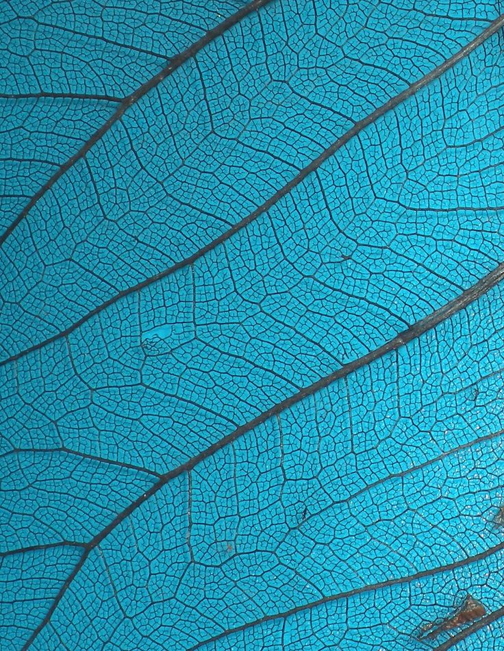 Stock Texture - Leaf Veins III by *rockgem on deviantART