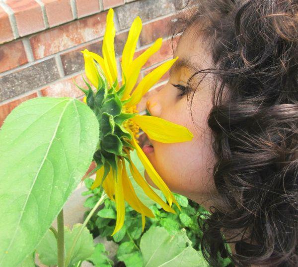 How to Grow Sunflowers with Kids
