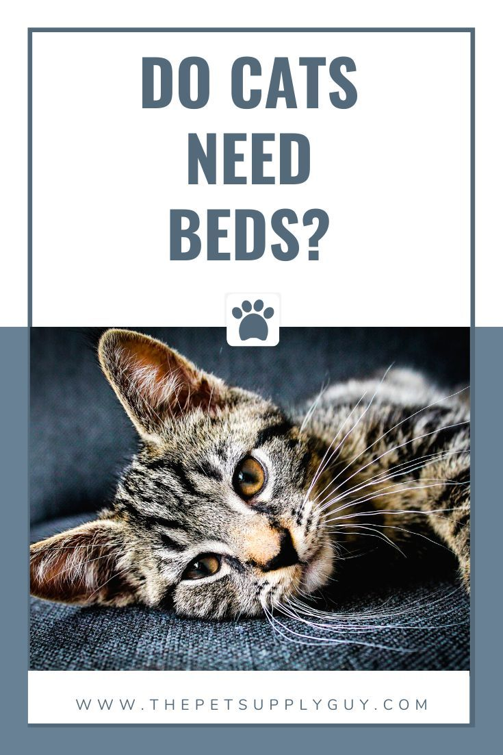 Do Cats Need Beds The Pet Supply Guy In 2020 Kitten Beds Beautiful Cats Pictures Unique Cat Bed