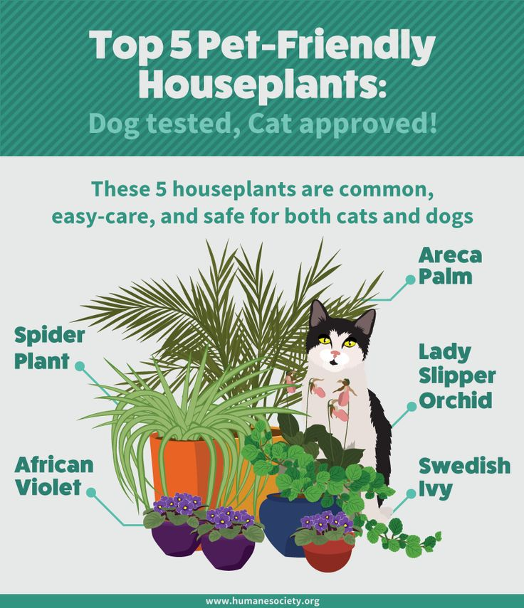 The 25 best cat friendly plants ideas on pinterest cat for Areca palm safe for cats