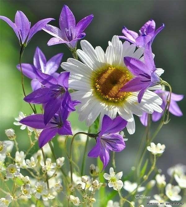 выцвела гиф луговые цветы квартиры имеют