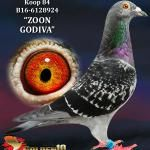 "084 - B16-6128924 ""ZOON GODIVA"" ♂ | De Duif"