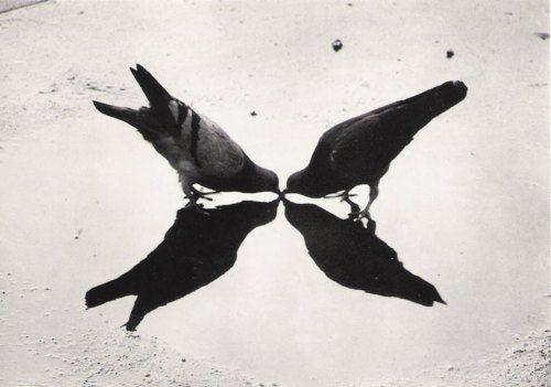 Ernst Haas, Trafalgar Square Pigeons, London, 1949