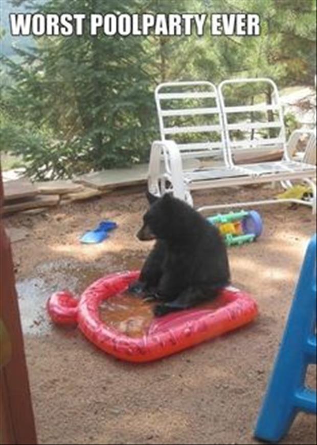 Dump A Day Attack Of The Funny Animals - 24 Pics -- Hahahaha