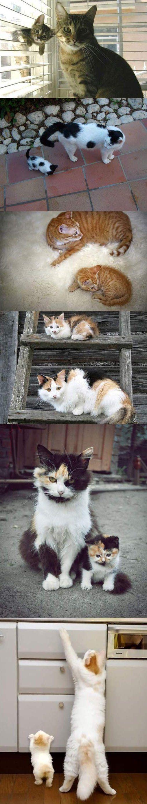 Like Parents, Like Kittens