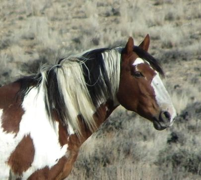 Sand Wash Basin Wild Horse Picasso Horses Pinterest