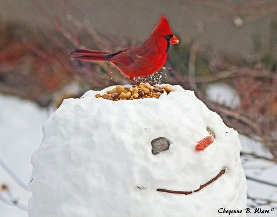 Snowman, such a cute idea.: Snow Sculpture, Winter, Birds Feeders, Bird Feeders, Cute Ideas, Christmas, Snowman, Kids, Cardinals